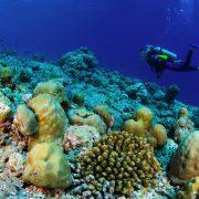 exploração natureza marinha mergulho com garrafa